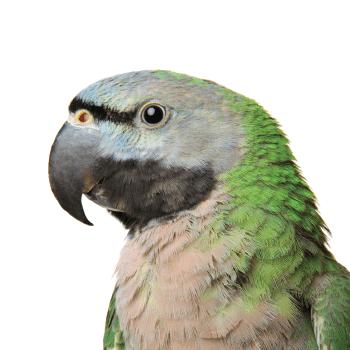Papageienvögel